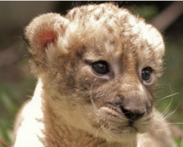 El Zoológico Nacional fue seleccionado como finalistas para los Premios Latam